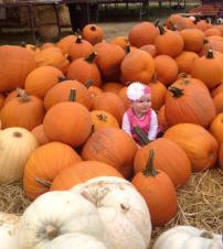 lavoies pumpkins