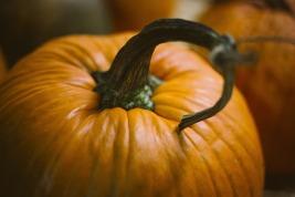 pumpkin-1031112_960_720