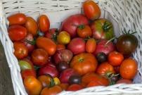 vegetables-930753_960_720